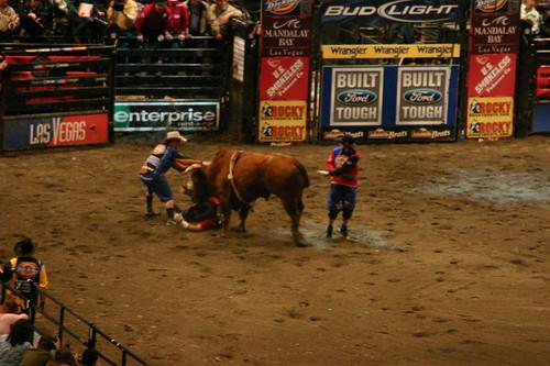 Madison square garden bull riders championship pixxiestails flickr for Bull riding madison square garden