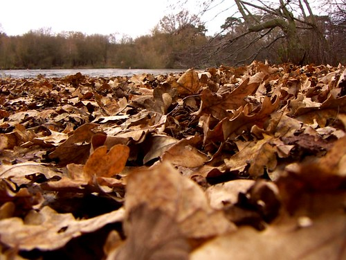 leaves | by keithlard