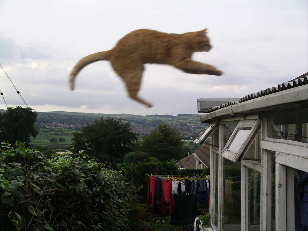 Flying Cat Our Cats Like To Jump From The Wall To The