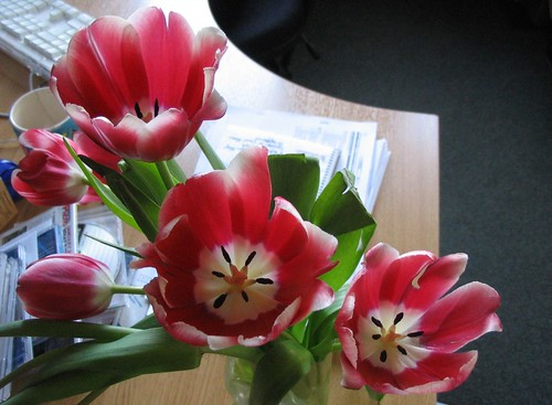 Messy desk, tulippy tulips | by Dinnovation