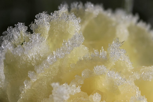 Lemon sorbet? frost series #8 | by Lord V