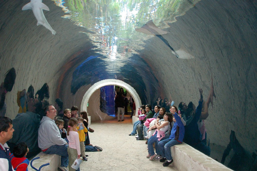 Tunnel Of Water Surrounded By Sharks And Rays And