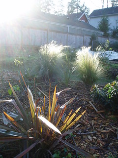 Sunlit grasses | by RHR Horticulture