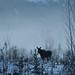 moose05.jpg