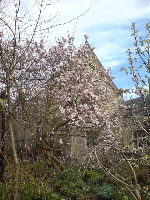 Magnolia Tree And Little St Marys Church Helen Lynn Flickr
