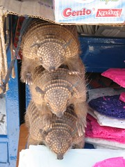 Stack of Armadillos, obviously! | by traveldemons