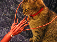 Squid vs. Cat, II (061226_gsvc) | by cephalopodcast