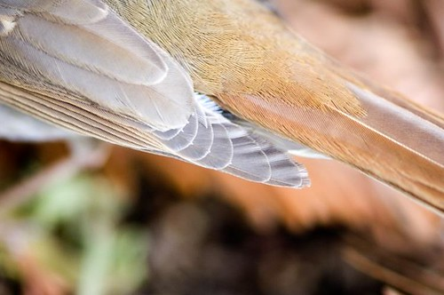 wing it | by cmacphotography