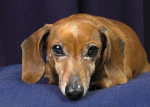 Mites Around Dogs Eyes Remedies