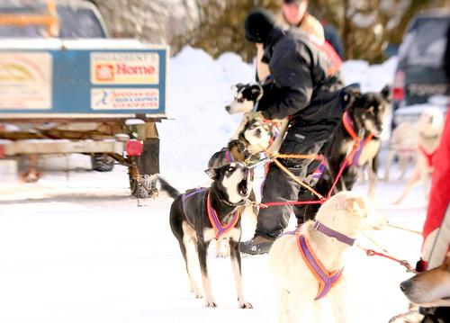 Image Result For Dog Sled Races