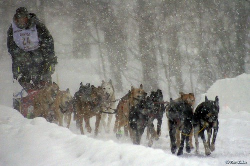 Dog sled races, UP200, 2007 | by e.rabior
