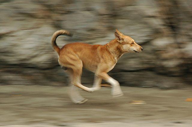 Dog Running At Large Fine In Powhatan Va
