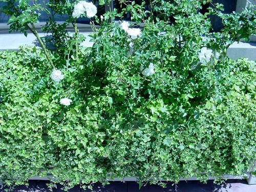 wedding flowers ivy