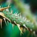 thorns on green
