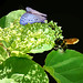 Bee and Buttefly Amid Green by Danny C. Sillada