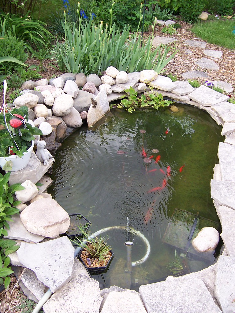 Backyard pond anita wilcox flickr for Como construir una laguna artificial