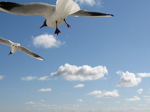 """No bird soars too high if he soars with his own wings"" William Blake 