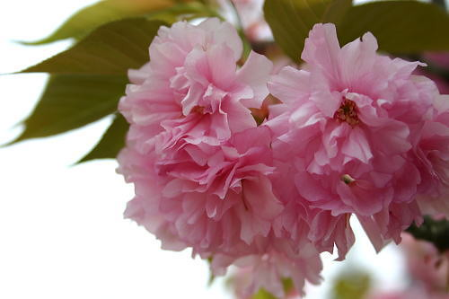 Flowered Up - Flowered Up Live