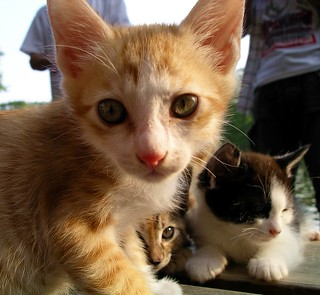 Park kittens | by Blue Lotus