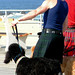 Poodles, Kilts and Boots on the Boardwalk