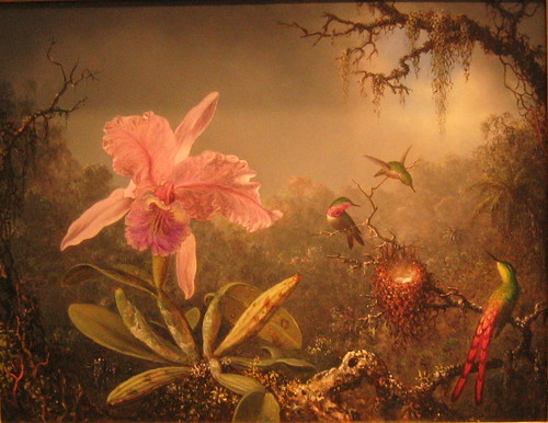 Carreleya Orchid and Three Brazilian Hummingbirds by Martin Johnson Heade | by Micah & Erin