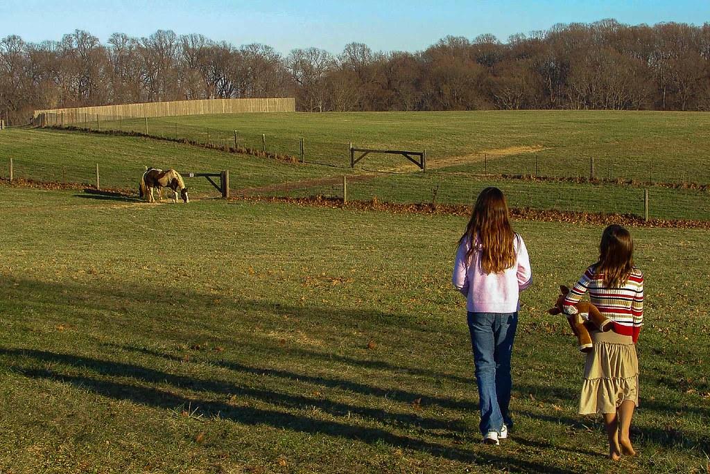 Little Girls Love Horses