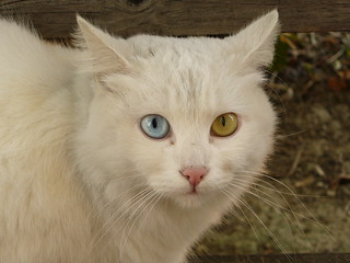 Il gatto Briciola, my friend with pretty eyes | by pizzodisevo 1937
