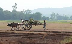 Leisure tour in Orissa