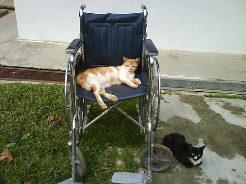 Cat on Wheelchair | by gniliep