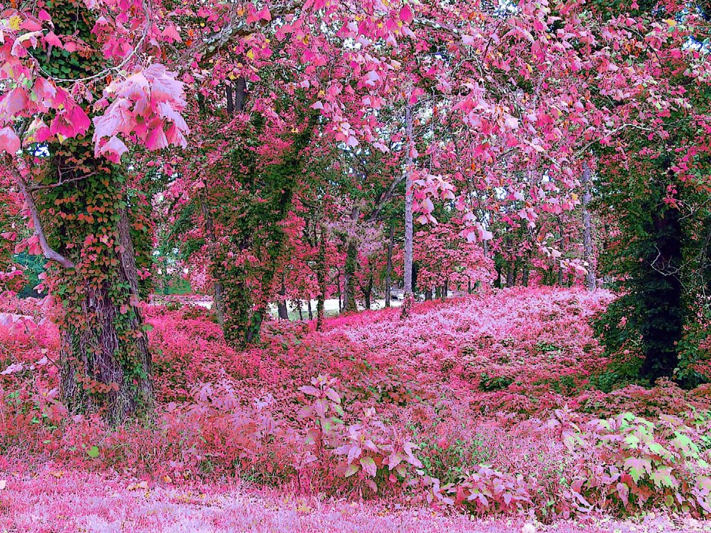 God 39 s garden was all green ps 39 d to pink lynn - Rose screensaver ...