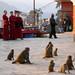 Tibetan Monk At Monkey Temple
