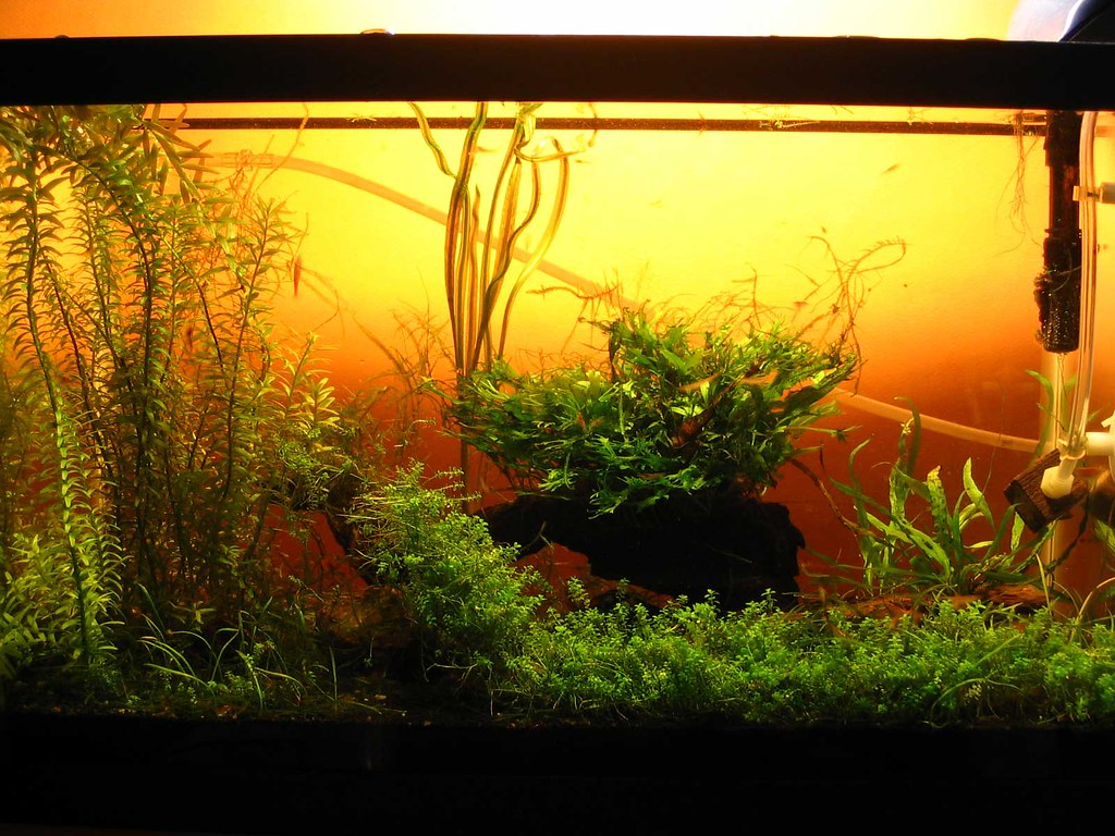 5 gallon shrimp tank 12-27-06 w/o moss wall | The tank after… | Flickr