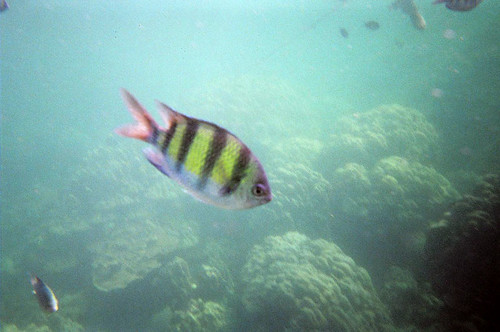 Krabi day 2 there 39 s plenty of fish in the sea we go for Go to plenty of fish com