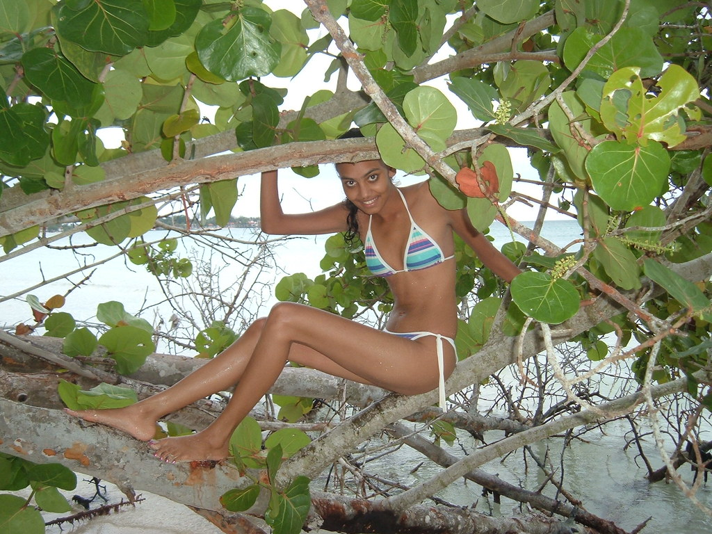 in a Sea Grape Tree | by