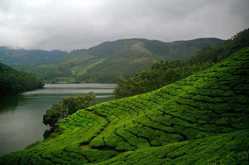 Kerala - Tea by the Lake | by josh-n
