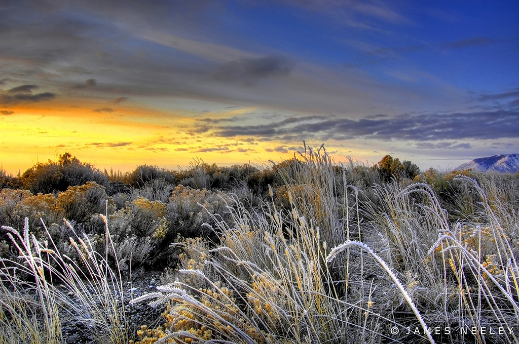 High Desert Glory