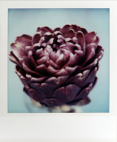 The Purple Artichoke | by futurowoman