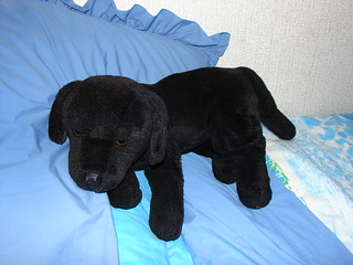 Cuddly Toy Dog Called Spoofer