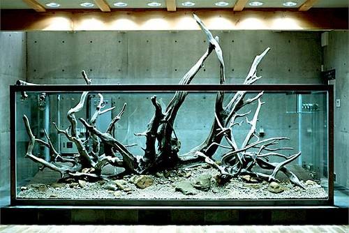 Amano Aquarium Setup 2 Gigantic Drift Woods Dragonets Flickr