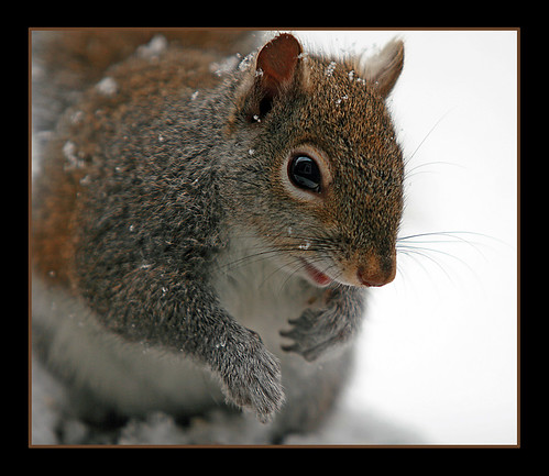 got nuts? | by jaki good miller