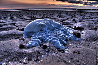 Stranded Jellyfish | by Garry - www.visionandimagination.com