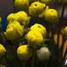 Ranunculus 1