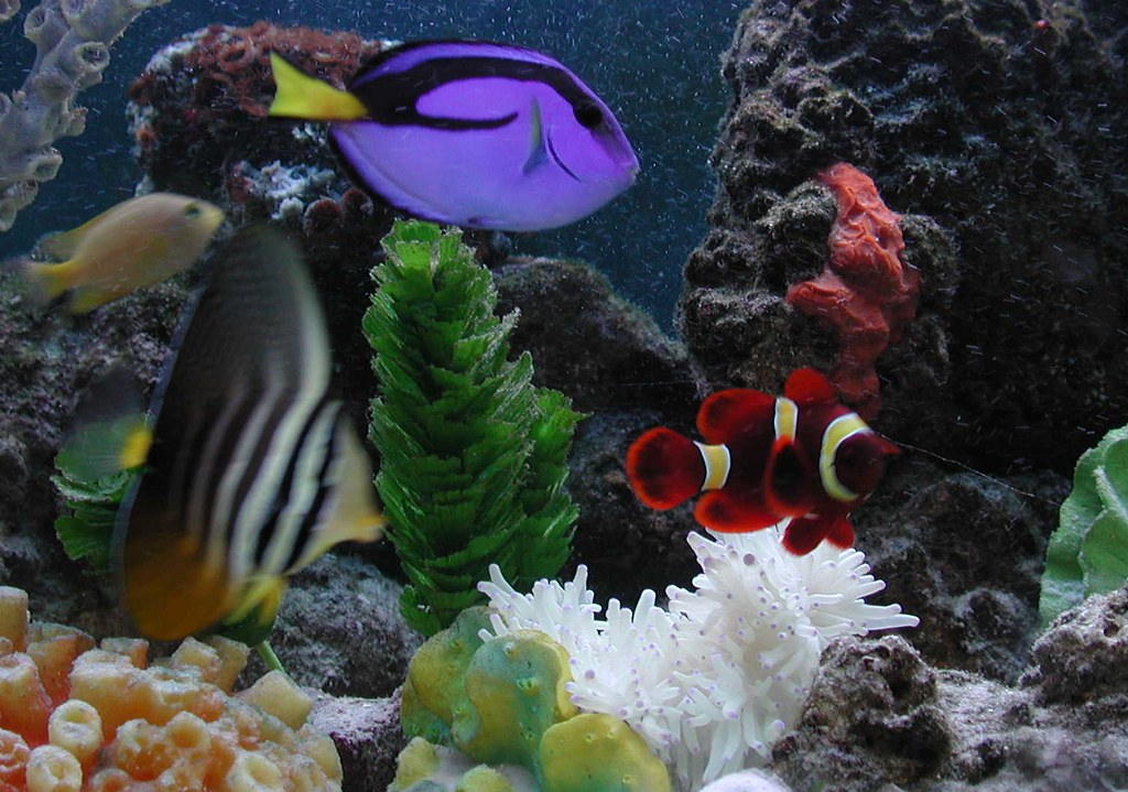 My saltwater fish tank my saltwater fish tank from left for How to make saltwater for fish