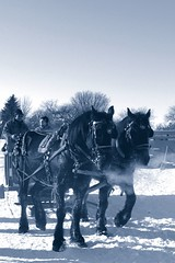 Horse and sleigh at Lincoln Drive Park, Grand Forks, N.D. 2 (alt crop) | by tuey