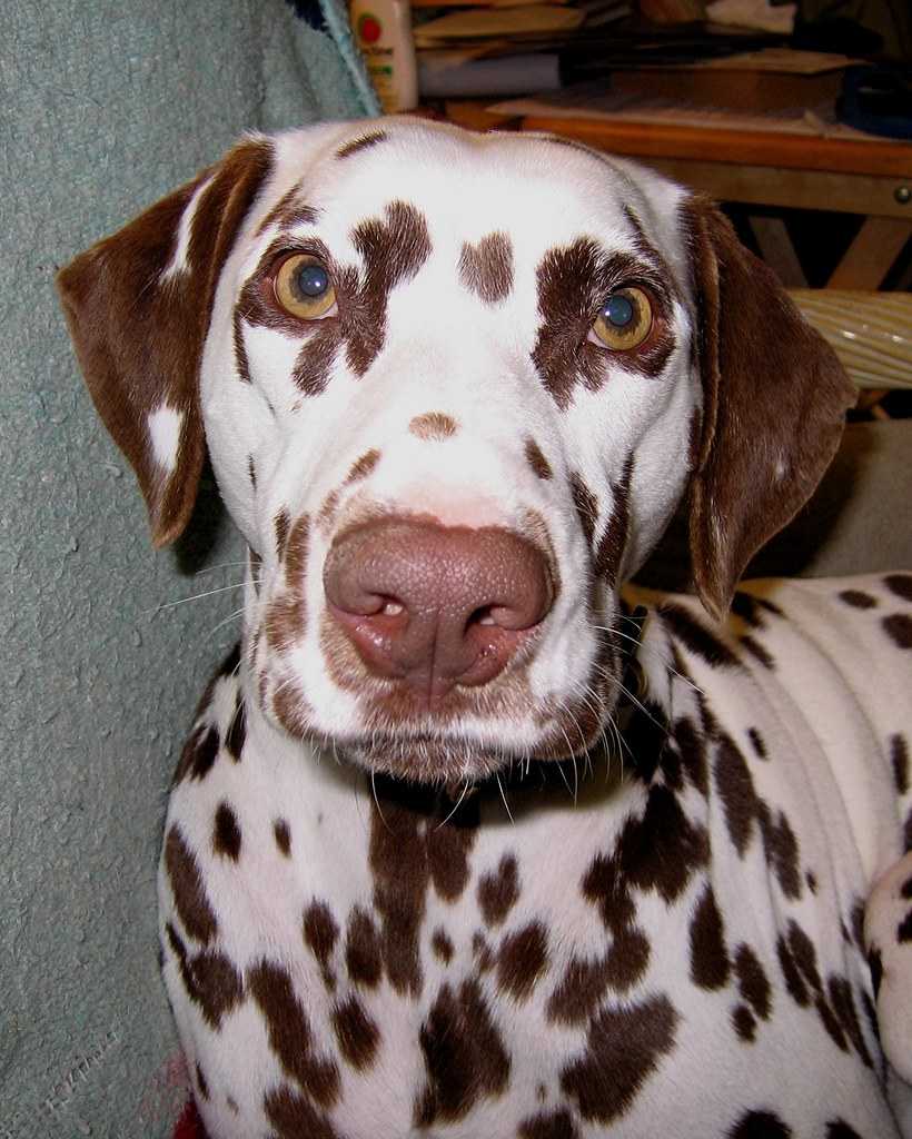Dog Breeds With Spotted Skin