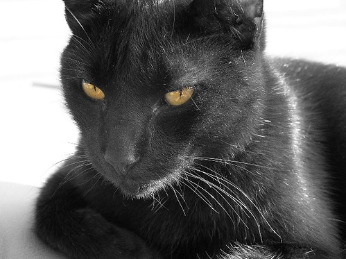 Black Cat With Yellow Eyes | Becky McCray | Flickr