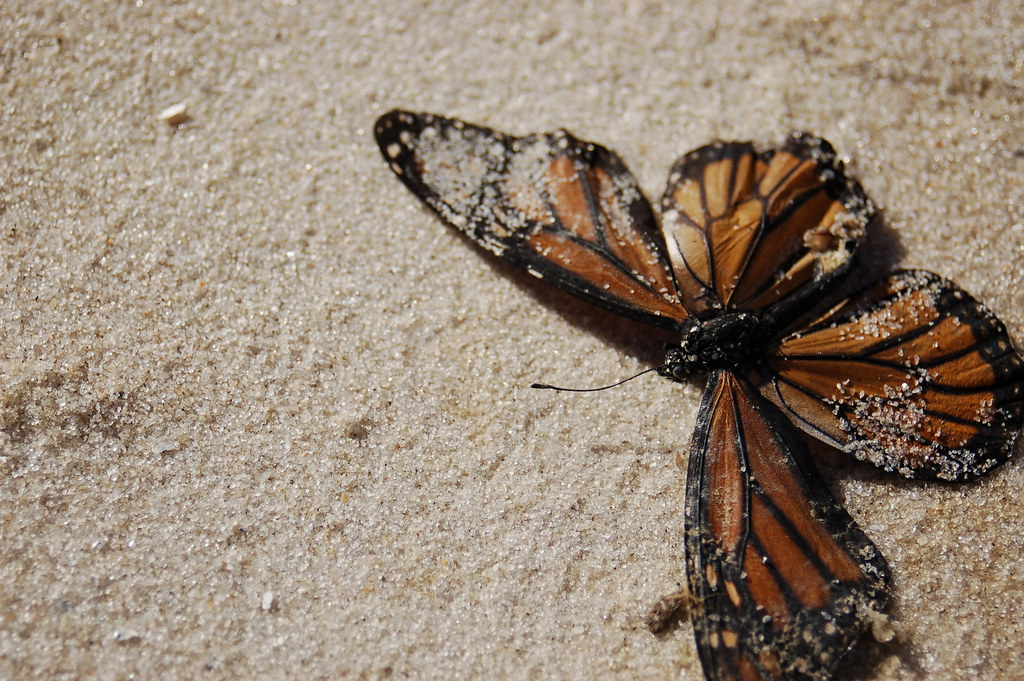 dead butterfly | Brand...