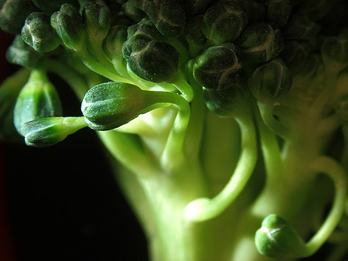 broccoli | by Trazy