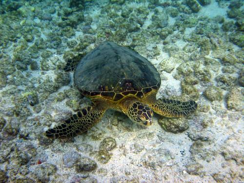 Image 12534 Place Usa Hawaii Big Island Hawaii