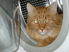 Cat in a washing machine | by ZeroOne